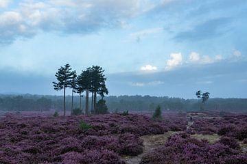 Heideveld Utrechtse heuvelrug Leusden Amersfoort van Peter Haastrecht, van