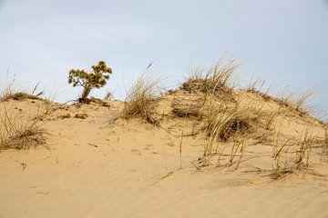 De duin in het Hulshorster Zand op de eerste lentedag van Studio de Waay