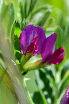 Ein Makro einer kleinen Blume von Gerard de Zwaan