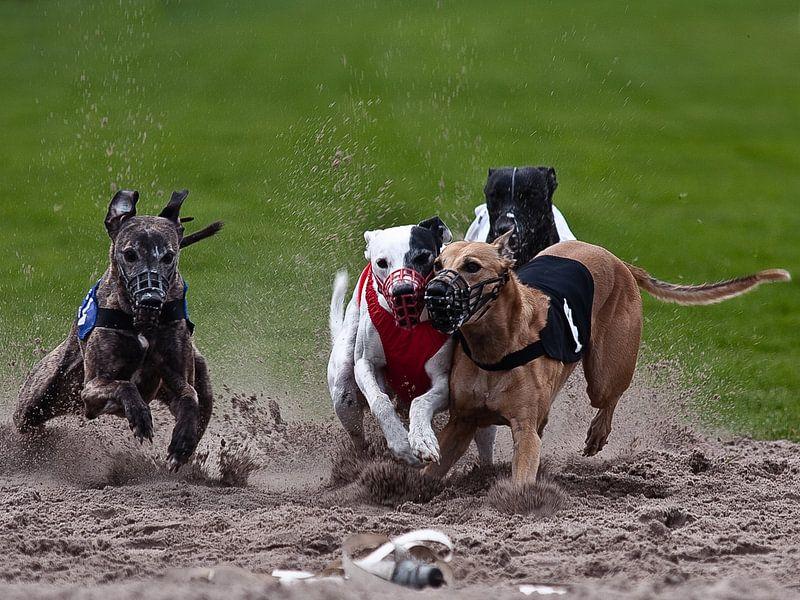 hondenrace van Jos Verhoeven