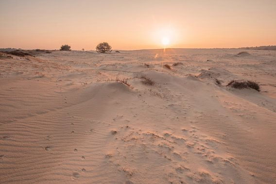 Stuifzand landschap in Nationaal Park de Hoge Veluwe