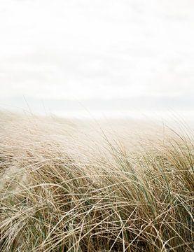 Dünengras von Raisa Zwart