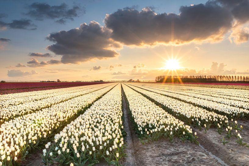 Sunshine van Jan Koppelaar