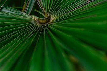 Nahaufnahme eines Palmenblattes von Simone Neeling