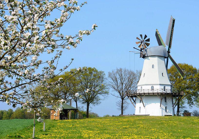 Ancient Windmill in Spring van Gisela Scheffbuch