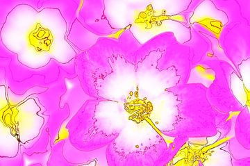 Pretty in Pink von De Rover
