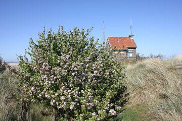 Huisje in de duinen van Terschelling van
