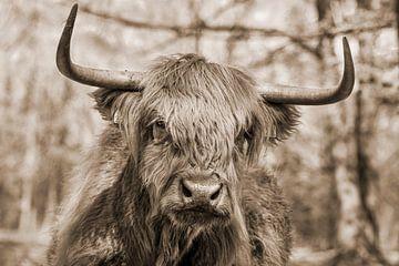 Schotse hooglander in sepia van Martine Stevens
