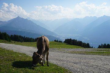 Koe op de Patscherkofel bij Innsbruck, Tirol (Oostenrijk) van Kelly Alblas