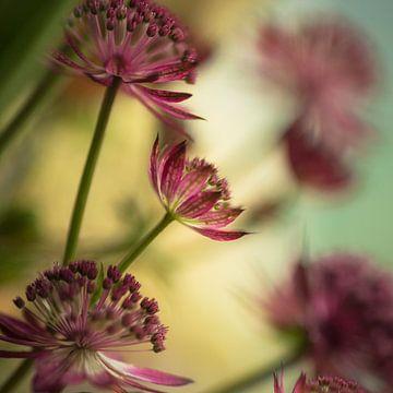 Blume # 12 von tim eshuis