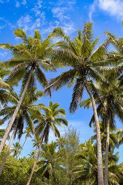 Palmen von Lizette Schuurman
