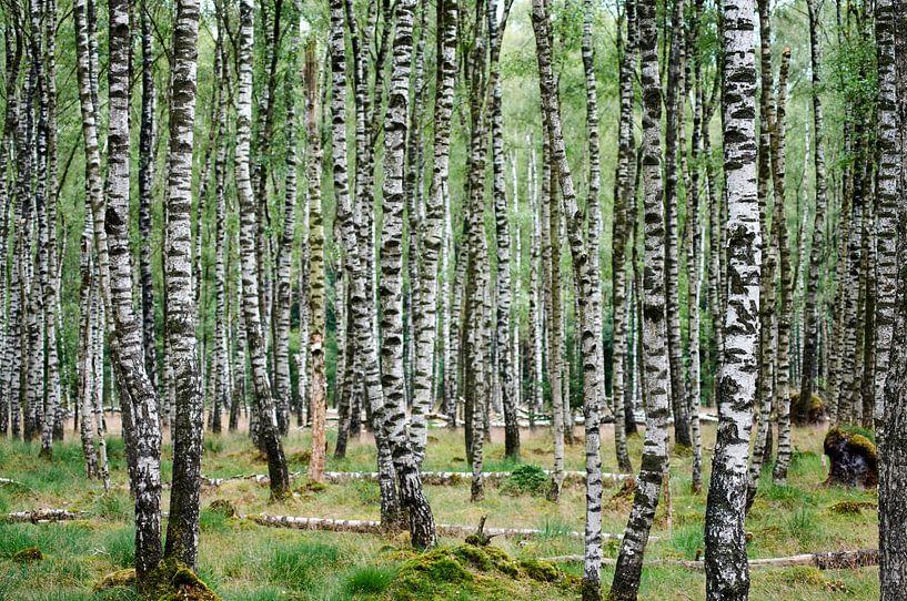 Berkenbos van Erik Reijnders
