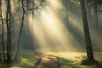 Matinée magique dans les forêts de l'Utrechtse Heuvelrug, Pays-Bas sur Sjaak den Breeje