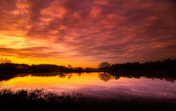 Kwakvors, zonsopkomst van Jeroen Mikkers