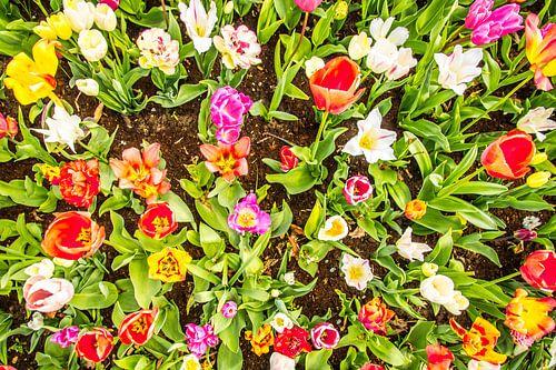 Een fleurige tuin met tulpen