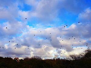 Zwerm opvliegende vogels van Chantal Koper