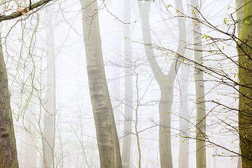 Un matin brumeux sur Christel Stevens