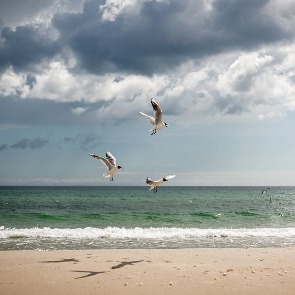 Baltic Sea van Yana Spiridonova