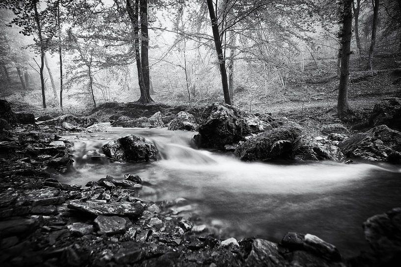 Ruisseau dans la forêt de Ninglinspo sur Jacqueline Lemmens
