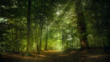 Zonlicht in het bos van Klaas Fidom