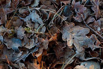 Warme herfst, koude winter #2