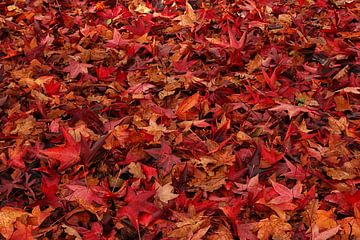 Kleurig bladertapijtje van