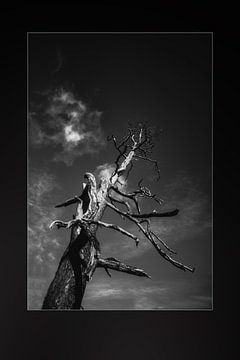 alter Baum von mario proeter