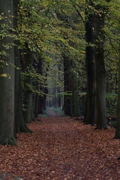 Bos van Colinda De Vries - Trof