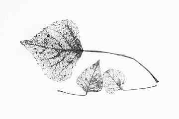 Graphic Botanical Japandi1 van Alie Ekkelenkamp