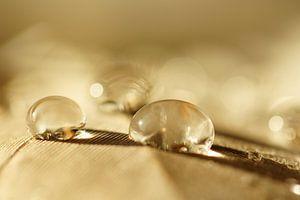 Desert drops
