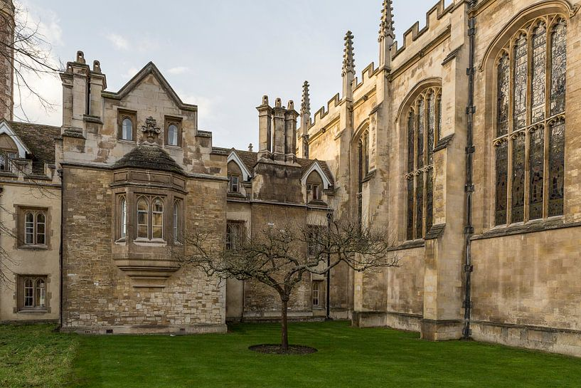 Sir Isaac Newton's appelboom van Ab Wubben