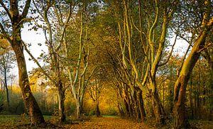 De herfst is losgebarsten van René Holtslag