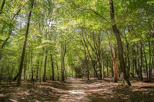 Bäume von Marian van der Kallen Fotografie