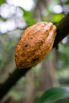 Cacaoboon van road to aloha