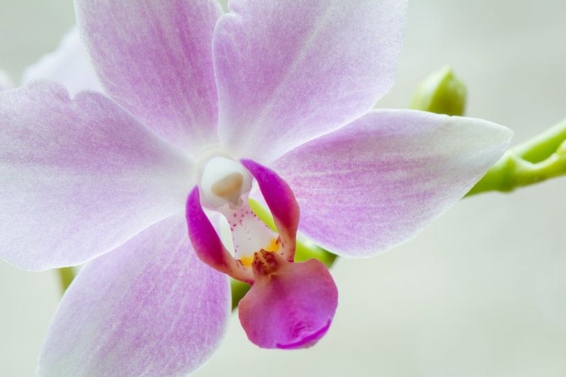 Witte Orchidee van Ronne Vinkx