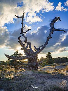 drents friese woud van Henri van Rheenen