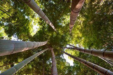 forêt de bambous 3 sur Anouschka Hendriks