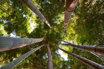 Bambuswald 3 von Anouschka Hendriks