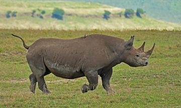 Nashorn im Ngorongoro-Krater von Esther van der Linden