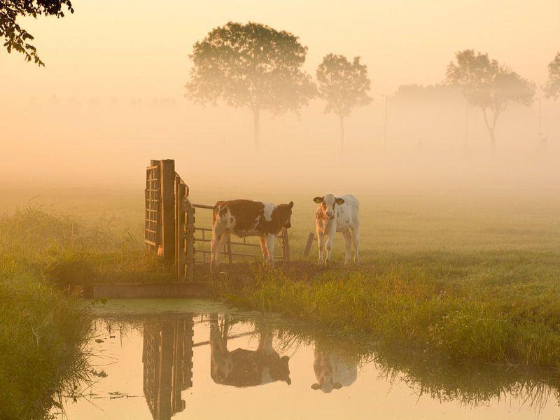 Koeien in de wei van Wilma van Zalinge