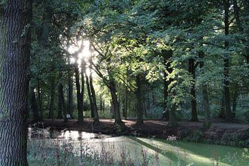 Bos van René van Proosdij