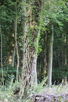Gevangen boom van Shirley Douwstra