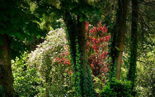 Zomer in de tuin