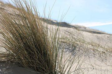 De Nederlandse duinen von Michiel piet