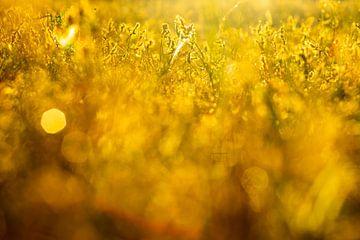 Gold von peterheinspictures