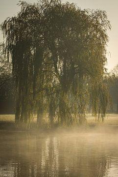 Saule pleureur dans le brouillard sur Hetwie van der Putten