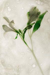 Bloemen om zeep geholpen 5 van