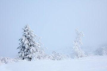 winter in Alaska van