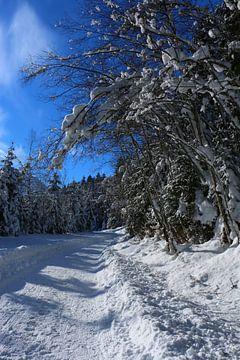 Die Schönheit des Winters van Christiane Schulze