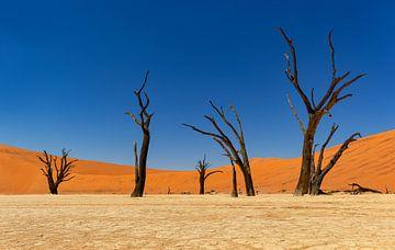 Sossusvlei Namibië (2) van Adelheid Smitt